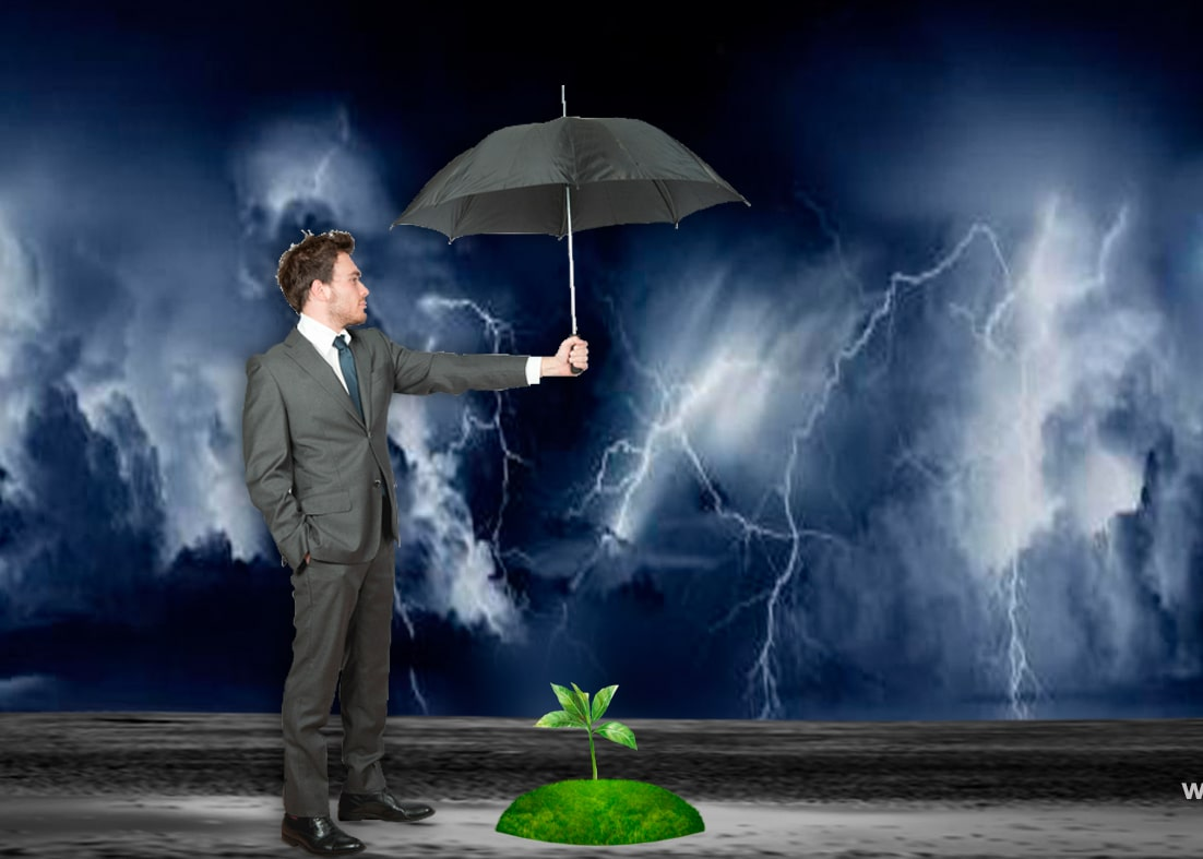 Адвокат защищает росток от непогоды